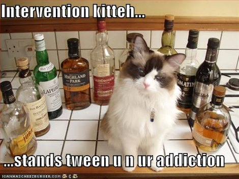 Chat anti-alcoolique